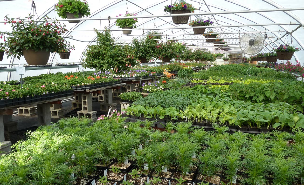 Blue Moon Garden And Nursery Spokane Plants Trees Shrubs
